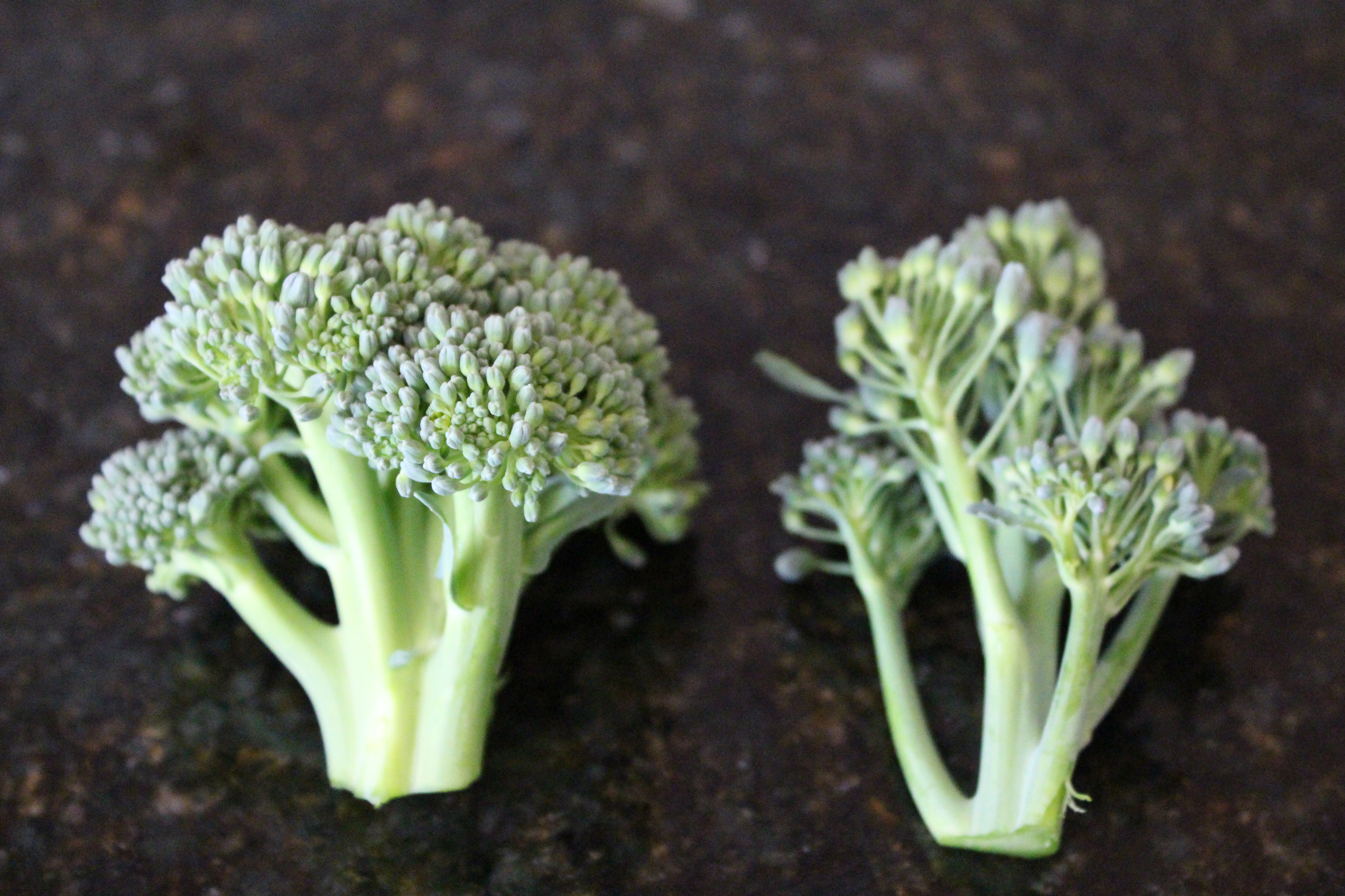 When To Harvest Broccoli The Gardener And The Chef