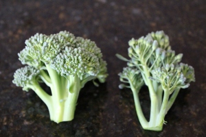 Broccoli florets comparison between harvest ready and past its prime.